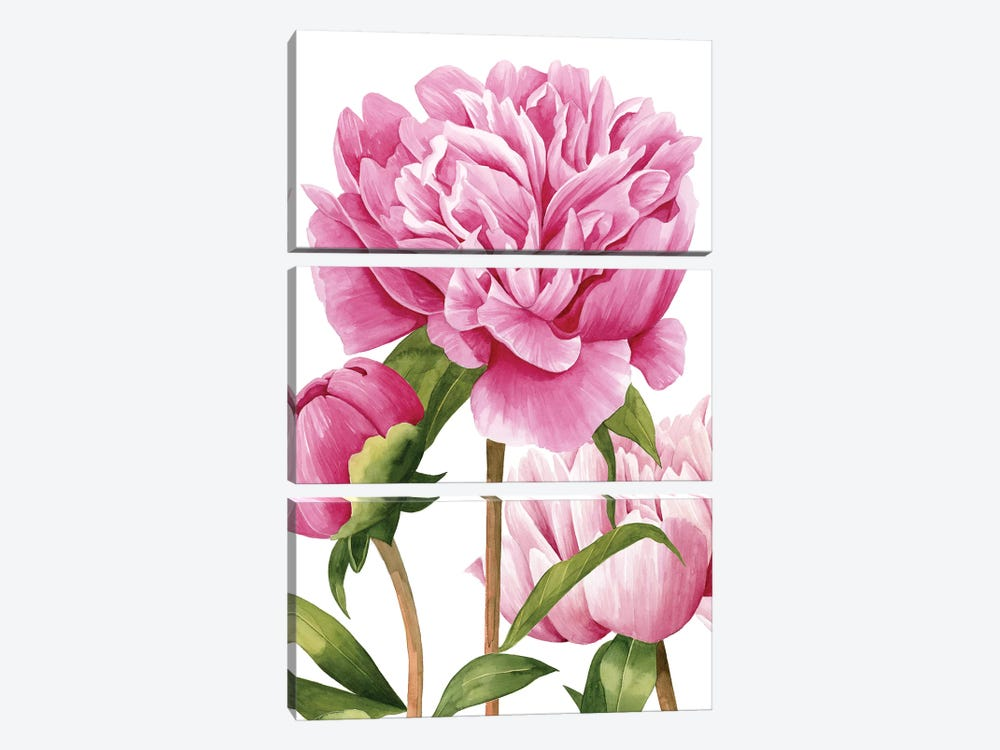 Winsome Peonies II by Grace Popp 3-piece Canvas Art