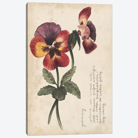 Garden Studies II Canvas Print #POP762} by Grace Popp Canvas Art Print