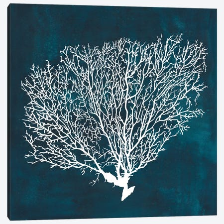 Inverse Sea Fan II Canvas Print #POP766} by Grace Popp Canvas Art
