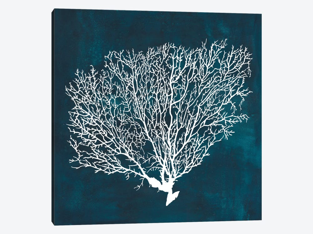 Inverse Sea Fan II by Grace Popp 1-piece Canvas Art Print