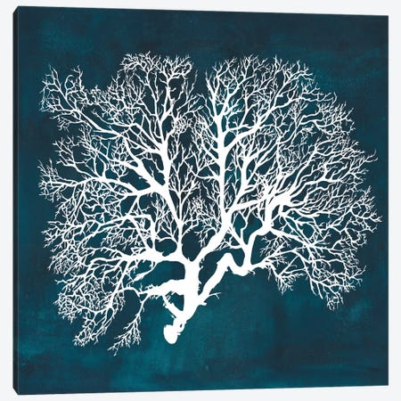 Inverse Sea Fan III Canvas Print #POP767} by Grace Popp Canvas Artwork
