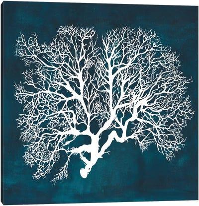 Inverse Sea Fan III Canvas Art Print