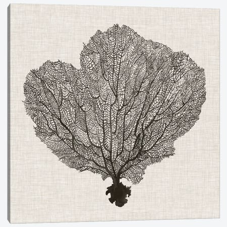 Shadow Sea Fan I Canvas Print #POP796} by Grace Popp Canvas Art Print