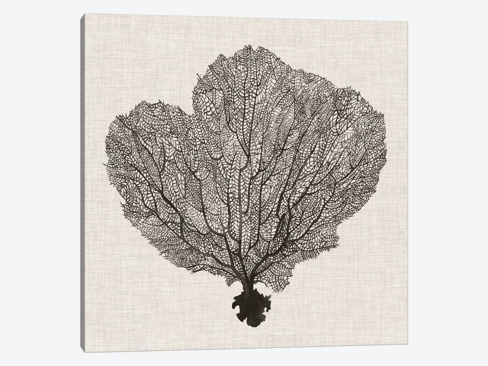 Shadow Sea Fan I by Grace Popp 1-piece Canvas Wall Art