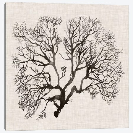 Shadow Sea Fan III Canvas Print #POP798} by Grace Popp Canvas Artwork