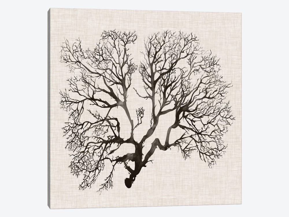 Shadow Sea Fan III by Grace Popp 1-piece Canvas Art