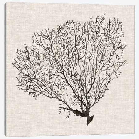 Shadow Sea Fan IV Canvas Print #POP799} by Grace Popp Canvas Wall Art