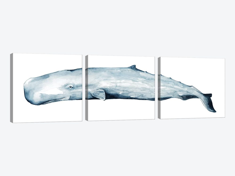 Whale Portrait II by Grace Popp 3-piece Canvas Art Print