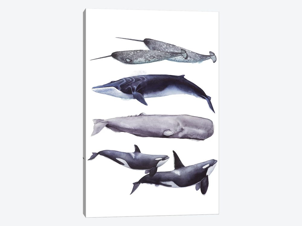 Whale Stack II by Grace Popp 1-piece Canvas Artwork