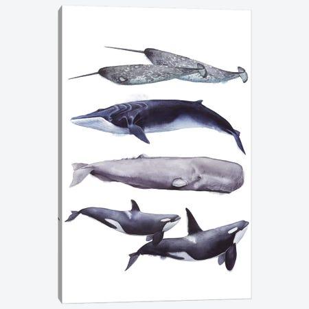 Whale Stack II Canvas Print #POP830} by Grace Popp Art Print