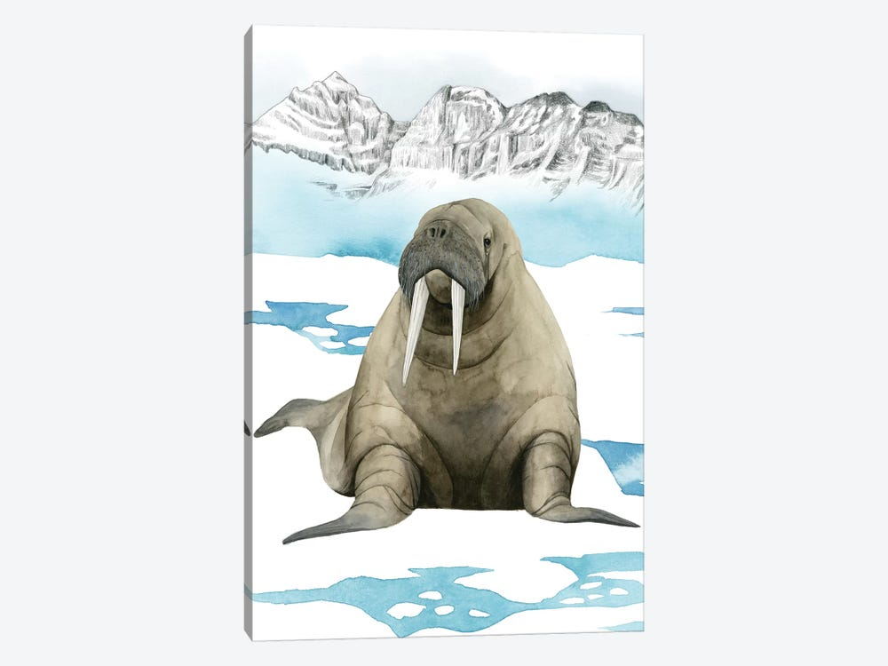 Arctic Animal III by Grace Popp 1-piece Canvas Art
