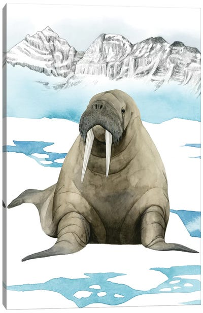 Arctic Animal III Canvas Art Print