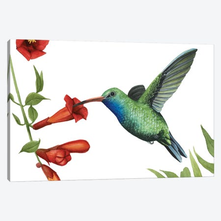 Hummingbird & Flower I Canvas Print #POP902} by Grace Popp Canvas Print