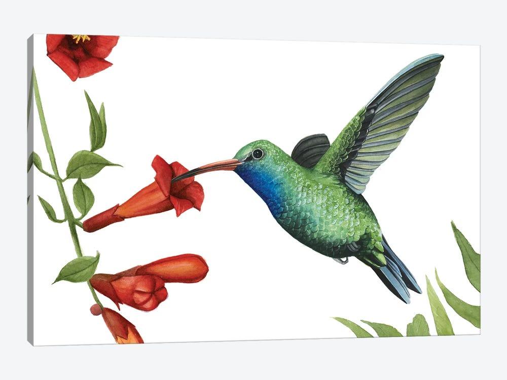 Hummingbird & Flower I by Grace Popp 1-piece Canvas Wall Art