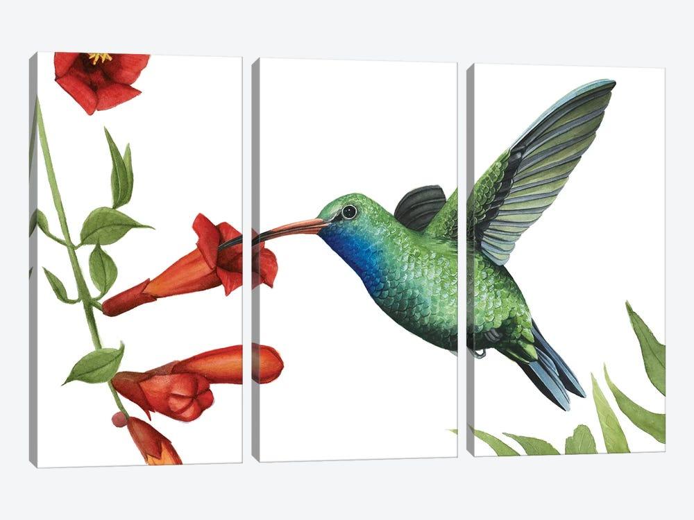 Hummingbird & Flower I by Grace Popp 3-piece Canvas Wall Art
