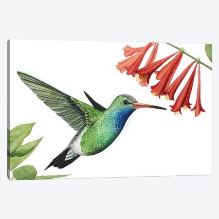Hummingbird & Flower II Canvas Print #POP903} by Grace Popp Canvas Art Print