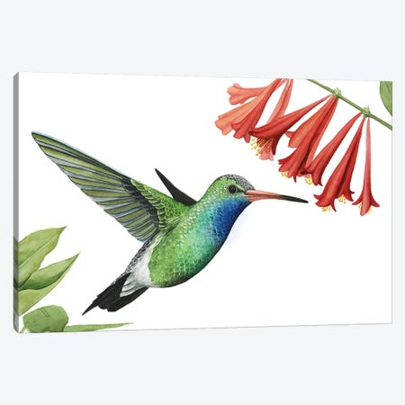 Hummingbird & Flower II Canvas Print #POP903} by Grace Popp Canvas Art Print