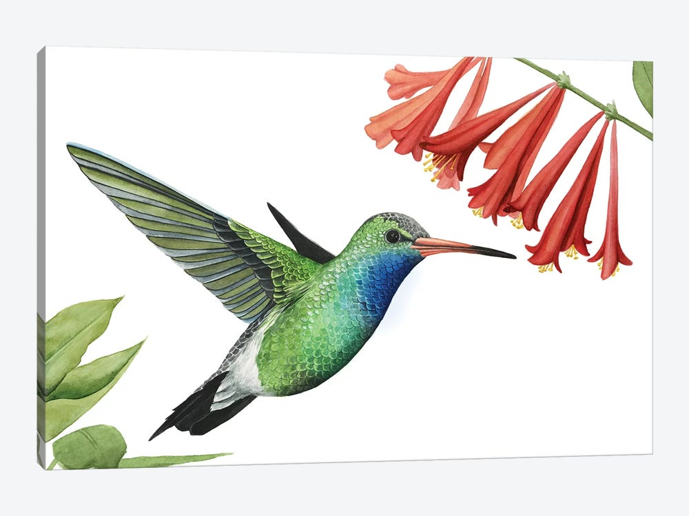 Hummingbird & Flower II by Grace Popp 1-piece Canvas Print