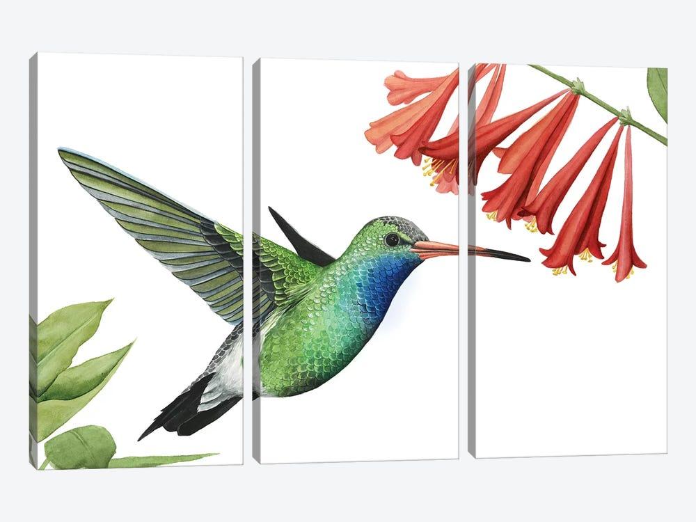 Hummingbird & Flower II by Grace Popp 3-piece Canvas Art Print