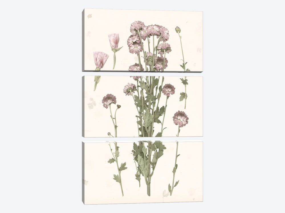 Pressed Blooms I by Grace Popp 3-piece Canvas Art Print