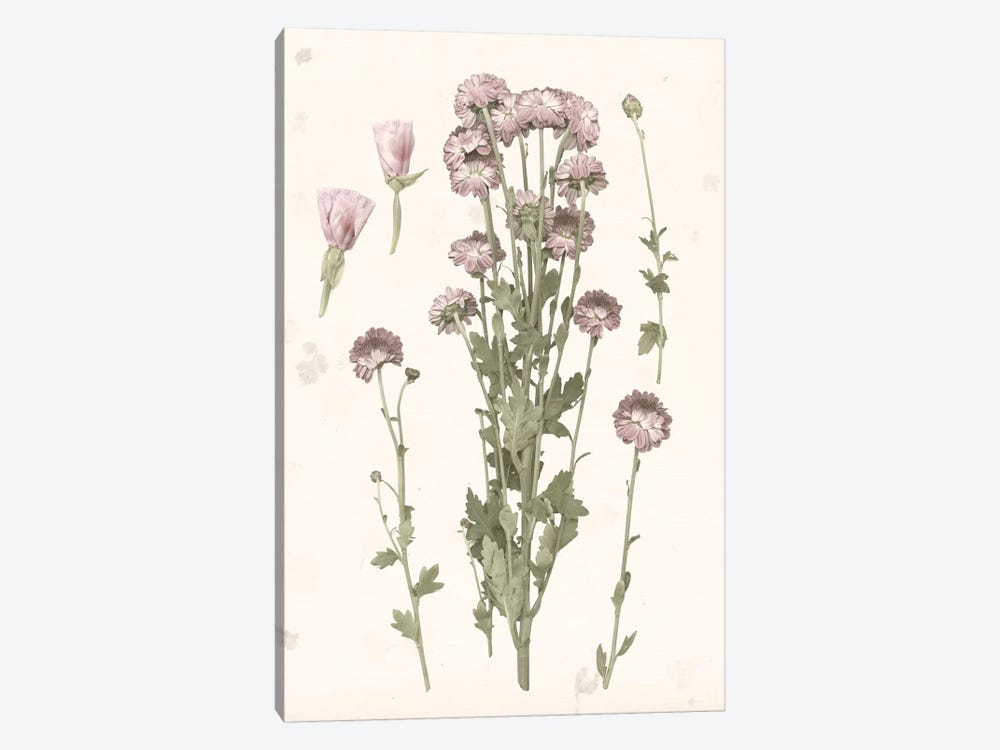 Pressed Blooms I by Grace Popp 1-piece Canvas Print