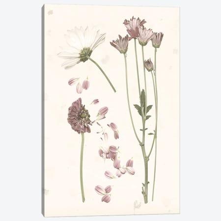 Pressed Blooms II Canvas Print #POP935} by Grace Popp Canvas Print