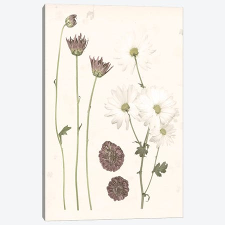 Pressed Blooms IV Canvas Print #POP937} by Grace Popp Canvas Art Print