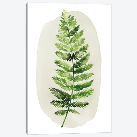 Spot Fern II Canvas Print #POP956} by Grace Popp Art Print