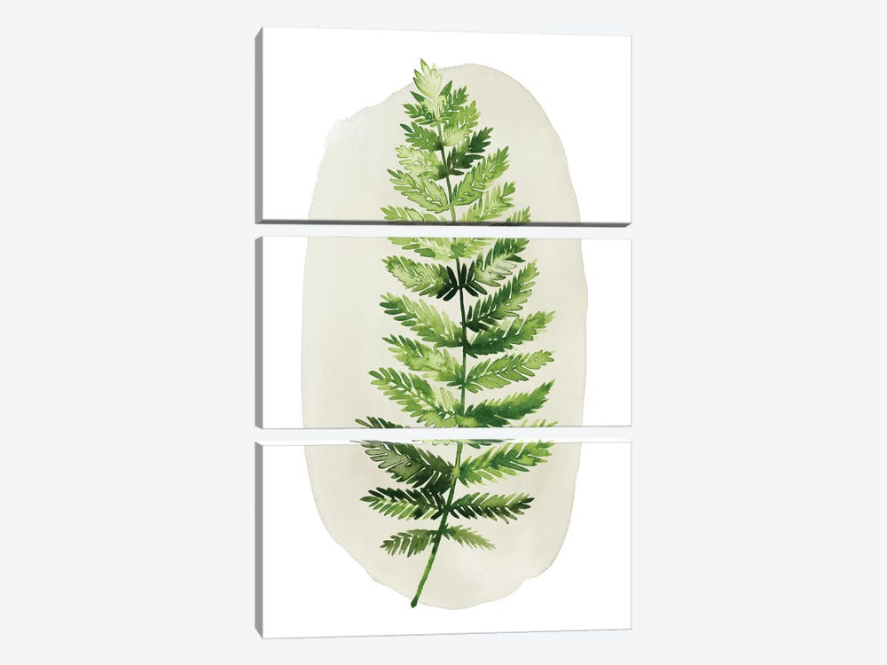 Spot Fern II 3-piece Canvas Art Print