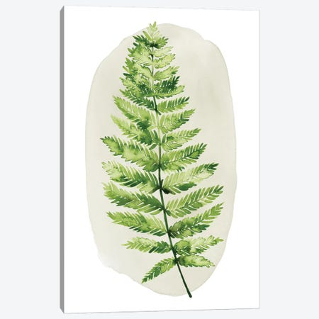 Spot Fern III Canvas Print #POP957} by Grace Popp Canvas Print