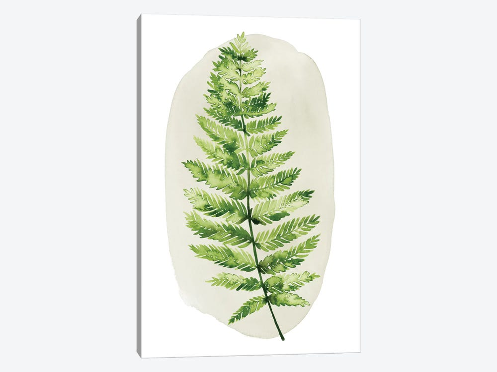 Spot Fern III by Grace Popp 1-piece Canvas Wall Art
