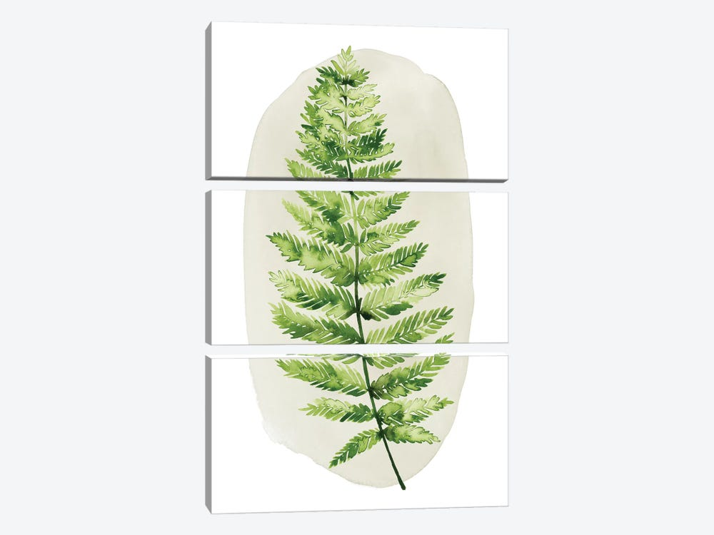 Spot Fern III by Grace Popp 3-piece Canvas Wall Art