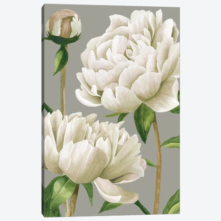 White Peonies I Canvas Print #POP970} by Grace Popp Canvas Art