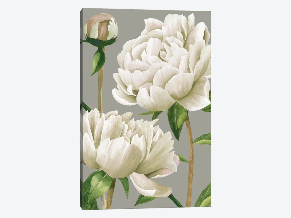 White Peonies I by Grace Popp 1-piece Canvas Print