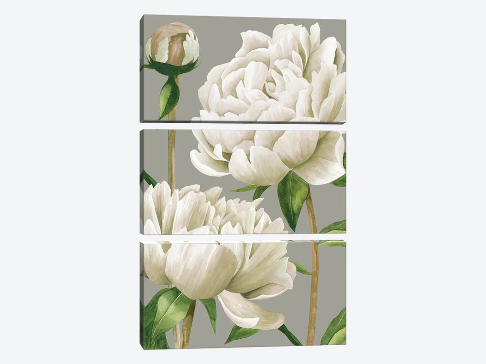 White Peonies I by Grace Popp 3-piece Canvas Print