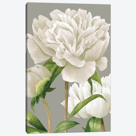 White Peonies II Canvas Print #POP971} by Grace Popp Canvas Artwork