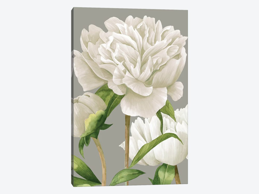 White Peonies II 1-piece Canvas Wall Art