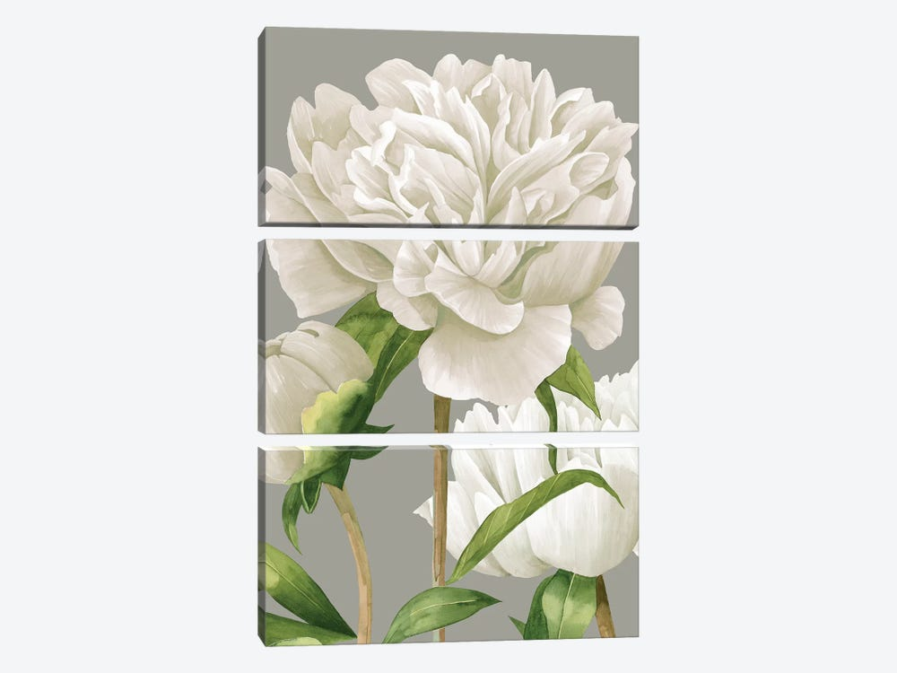 White Peonies II by Grace Popp 3-piece Canvas Wall Art