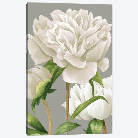 White Peonies II Canvas Print #POP971} by Grace Popp Canvas Artwork