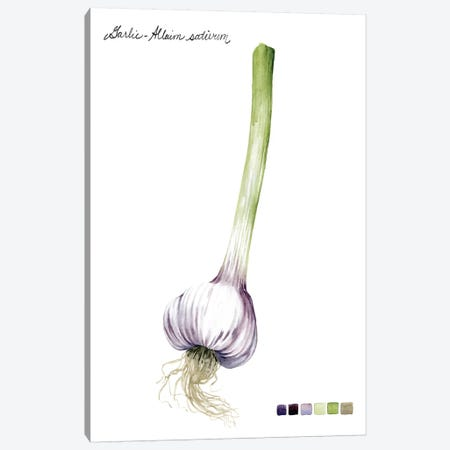 Root Vegetable I Canvas Print #POP97} by Grace Popp Canvas Art Print
