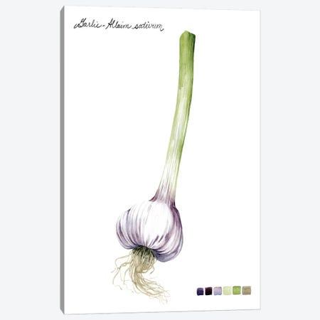 Root Vegetable I Canvas Print #POP97} by Grace Popp Canvas Art Print