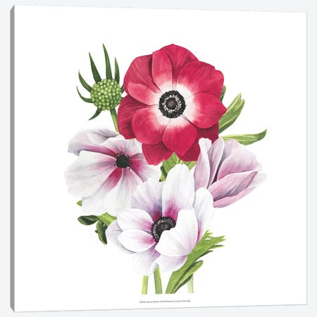 Anemone Blooms I Canvas Print #POP982} by Grace Popp Canvas Print