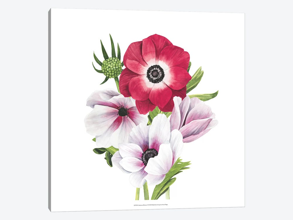 Anemone Blooms I by Grace Popp 1-piece Canvas Artwork