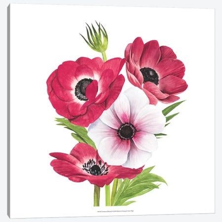 Anemone Blooms II Canvas Print #POP983} by Grace Popp Canvas Art Print