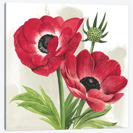 Crimson Anemones I Canvas Print #POP992} by Grace Popp Canvas Wall Art