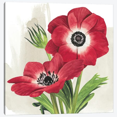 Crimson Anemones II Canvas Print #POP993} by Grace Popp Canvas Wall Art
