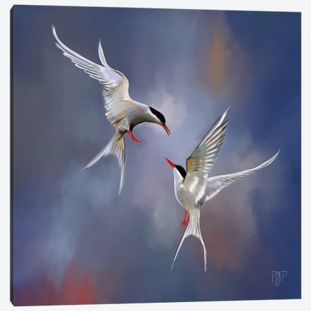 Artic Tern I Canvas Print #POR2} by Petur Orn Canvas Artwork