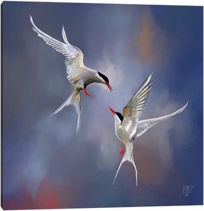 Artic Tern I Canvas Art Print