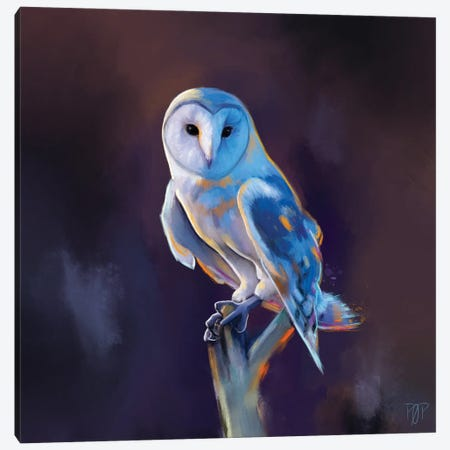 Barn Owl I Canvas Print #POR5} by Petur Orn Canvas Print