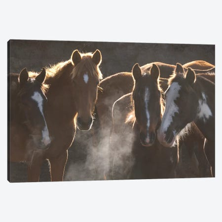 Domestic Horse Herd At Annual Round-Up, Backlit, Ecuador 3-Piece Canvas #POX13} by Pete Oxford Canvas Art
